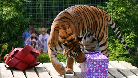 Amba inspects her present