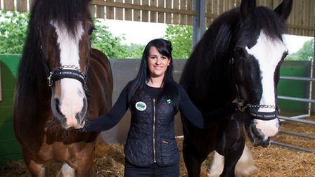 Willows Farm Village two new Shire Horses, Jade and Bob, with Sarah Goodey