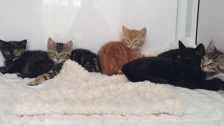 Kittens handed in at Wood Green