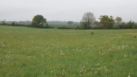 Wildflower field at Sewell Park, St Albans