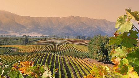 Chilean vineyards with the Andes in the background