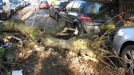 A tree fell onto Ridgmont Road this morning during strong winds. Photo courtesy of Sue O'Leary