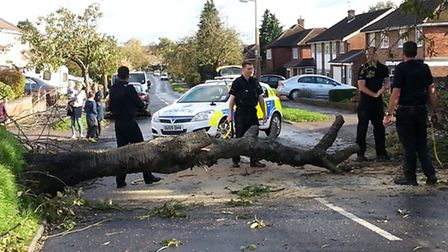 Police clear their sixth tree in Sherwood Avenue, Marshalswick