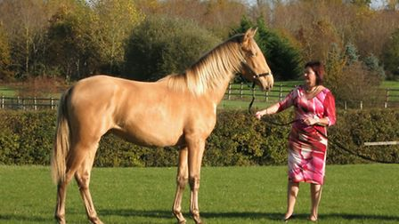"""St Albans ultra-rare stallion Pearl of Peace, a pearl-coated Spanish horse, pictured with """"horse-mad"""