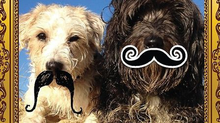 Dogs with a tash.
