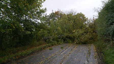 Motorists were diverted around Little Walden Road after a tree forced it to be closed.
