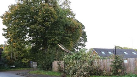 The top of the tree which broke off in the storm and crashed down on Isabel Reynolds fence