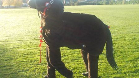 A pantomime horse at Greneway's sponsored laps event