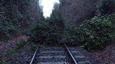 Tree on the Abbey Line