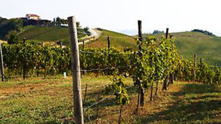 Cascione Vineyards
