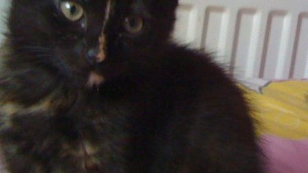 Gizmo, who was hit by a car in Sallowbush Road, Huntingdon.