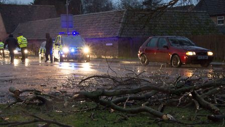 Tree falls on top of car in Hartford during storm. Picture: Cindy Eccles