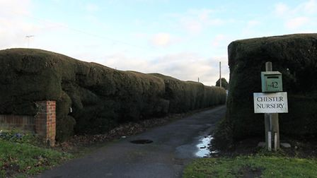 The entrance to Chester Nursery in Smallford