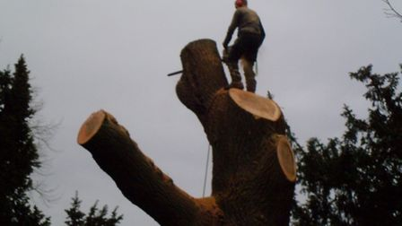 A 200-year-old tree had to be removed from the grave yard of St Peter's Church in London Colney afte
