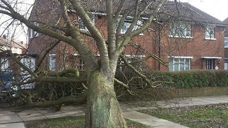 A tree toppled outside a house in High Oaks in St Albans, after the storm.Photo by M. Tahir