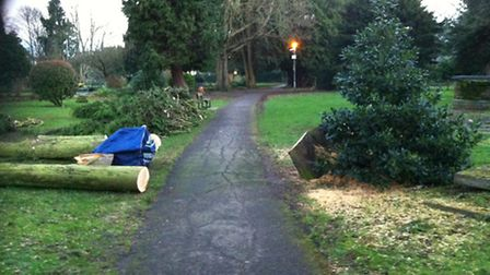 Trees chopped down at St Peter's Church in St Albans after recent stormy weather