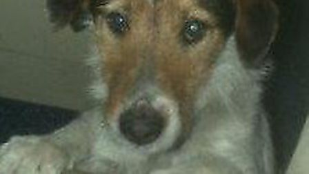 Police are appealing for information following the theft of this dog