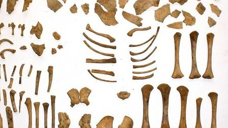 Infant bones found in cigar boxes within the Norris Museum. Picture: Chris Thomas