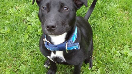 Angel, 8 months, is looking for a new home