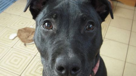 Angel face: 8 month old Angel is looking for a family to adopt her
