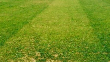 Alexis Mannion tweeted a picture of the green wicket