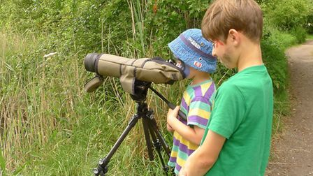 Youngsters take a look at the Lapwing chicks (Pic: David Hatton)