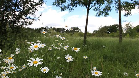 The wildlife meadow adjacent to Bedond Lane