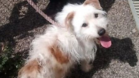 Dandy the terrier was found with no water