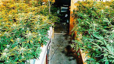 A cannabis factory like this one is believed to have been found in St Albans