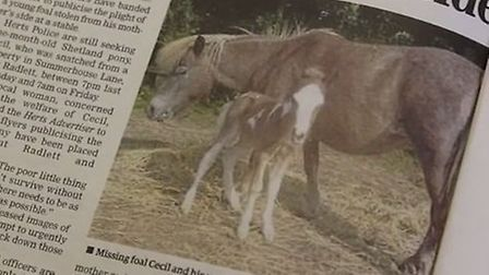 One of this week's stories in the newspaper