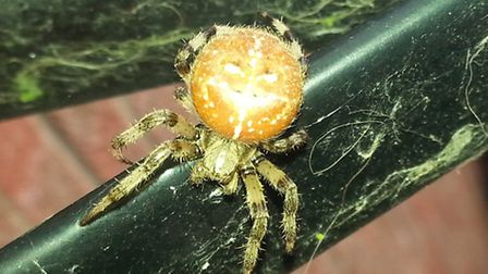 The spider up close.
