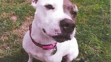 Sky needs a loving home soon as she gets stressed being in kennels
