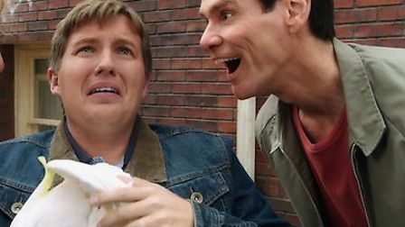Jim Carrey and Jeff Daniels are back in business.
