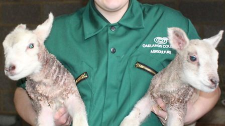 Lambing has begun at Oaklands College. Pictured is Shannon Allen, an agriculture student