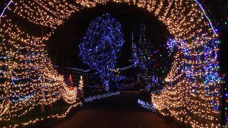The Christmas lights in a garden in Reed. Picture: Clive Porter.
