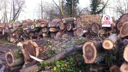 Trees have been felled near Frogmore Lake in Frogmore/Park Street