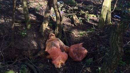Human waste has been dumped opposite Arsenal's training grounds in London Colney. Photo courtesy of