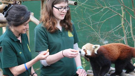 Jen Simonson and Lainie with red panda. PICTURE: Clive Porter.