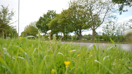 Long grass verges in Hatfield Road