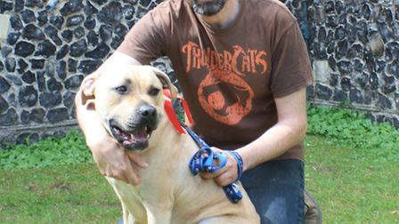 16 month old Buster, a cross bred Staffordshire from Foxton, won the Most Handsome Dog award, pictur