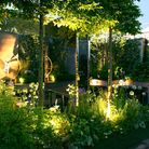 Lighting is a great way of showcasing your plants at night