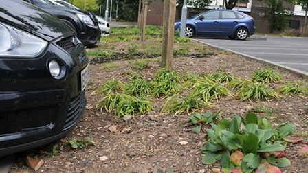 Bare looking flower beds in Westminster Lodge car park