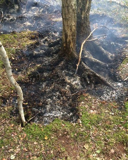 Trees were destroyed in the blaze at Holme Fen Nature Reserve.