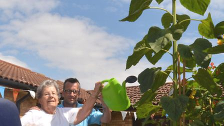 The Hillings, St Neots, have a 9 foot tall Sunflower, residents (l-r) Barbara Coombes, Barbara Broug
