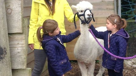 Jessica and Rosie with presenter Ferne Corrigan and an alpaca