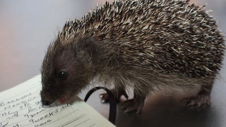 Nine week old Gollum checks out to make sure that Clive has his details correct. PICTURE: Clive Port