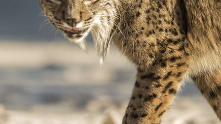 St Albans wildlife photographer Luke Massey is on a mission in Andalucia, to raise the profile of th