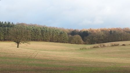 Anna Mangini's pictures of Herts countryside at Ayot Greenway