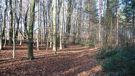 Park Wood, Chiswell Green, retains its ACV status