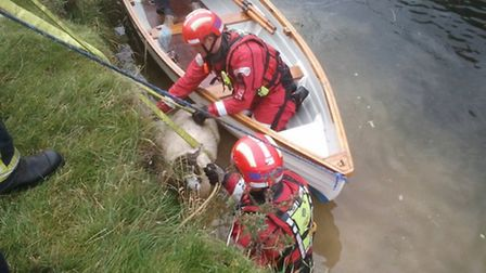 A sheep was rescued from a river near Hemingford Grey.
